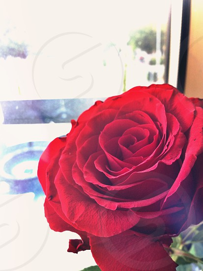 A rose and a view :)  photo
