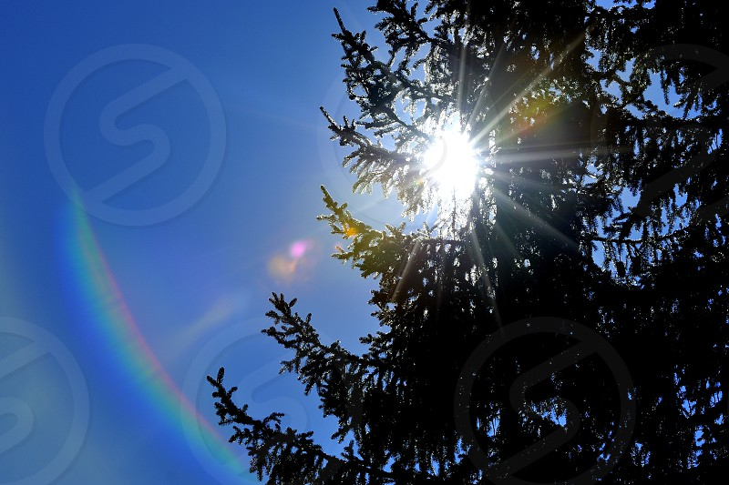 Lens rainbow by the sun between pines photo