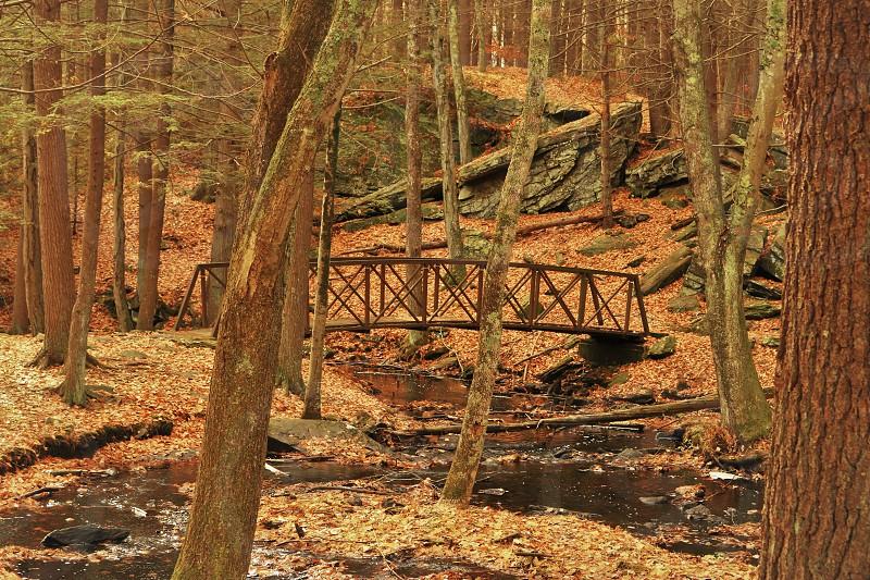 landscape nature fall woods bridge river running water trees leaves beauty Rhode Island photo