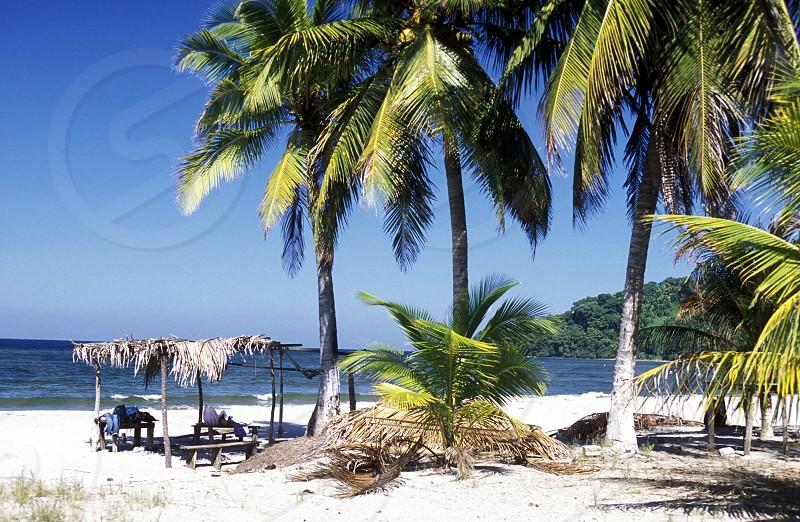 AMERICA LATIN AMERICA HONDURAS TELA CARIBBEAN CARIBBEAN SEA OCEAN COAST SEA BEACH PALM PALM TREE photo