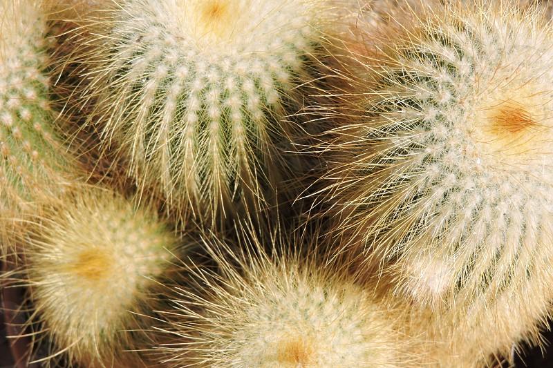 Cactus details photo