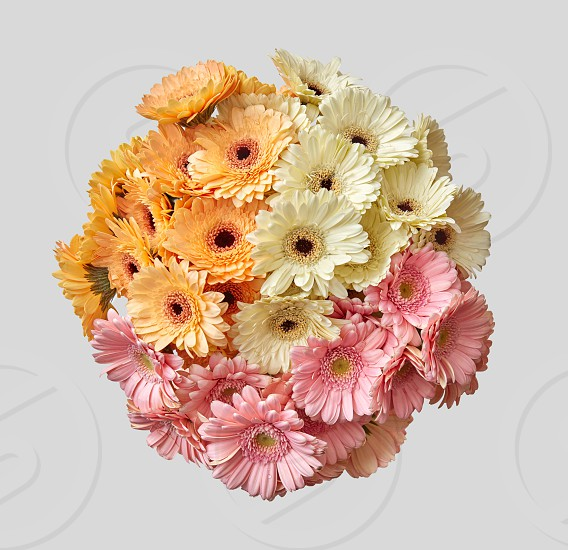 Creative layout made sphere wedding bouquet of colored gerberas. Spring minimal concept. Nature background. photo