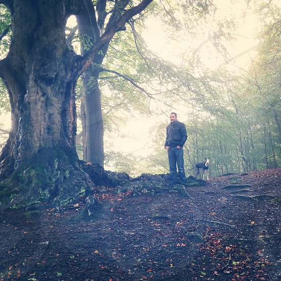 Whippet woods walks photo