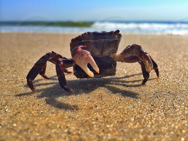 view of black crab on seashore photo