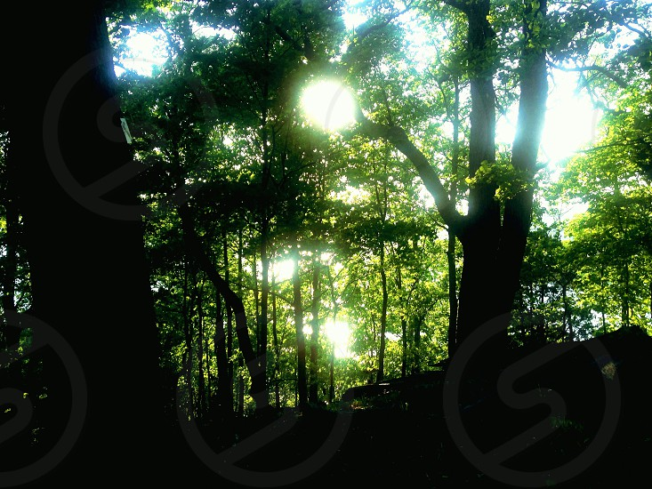 green forest trees photo