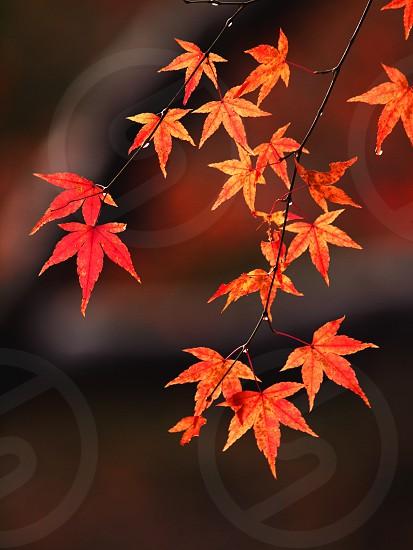 京都・嵐山祇王寺 Kyoto Arashiyama Gioji photo