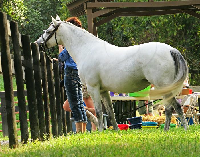 horse horse show Welsh Pony riding photo