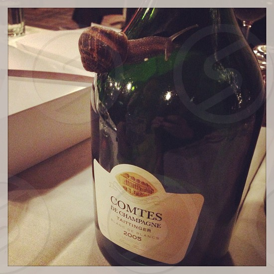 Champagne et escargot photo