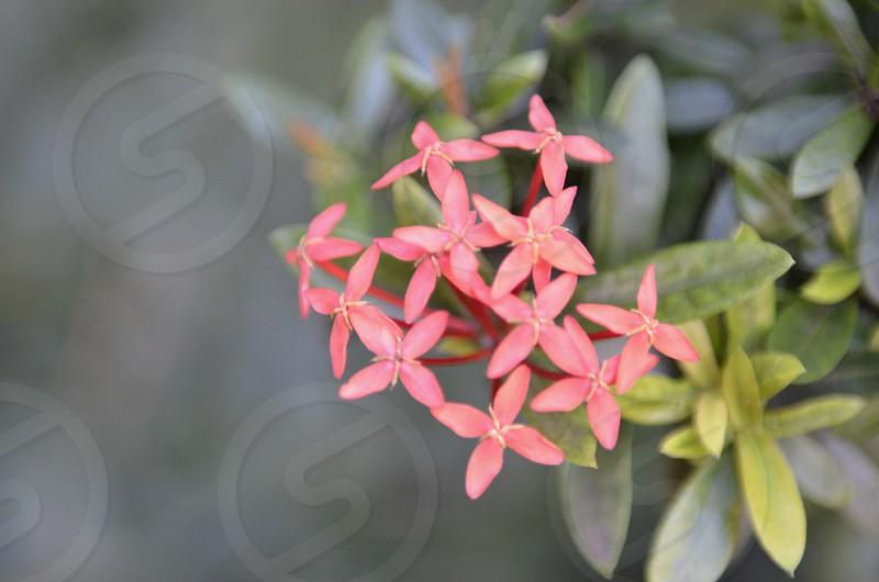 Tropical flower Hawaii Maui photo