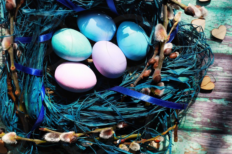 Easter eggs color religion willow blue  photo