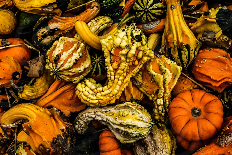 Pumpkins mix  photo