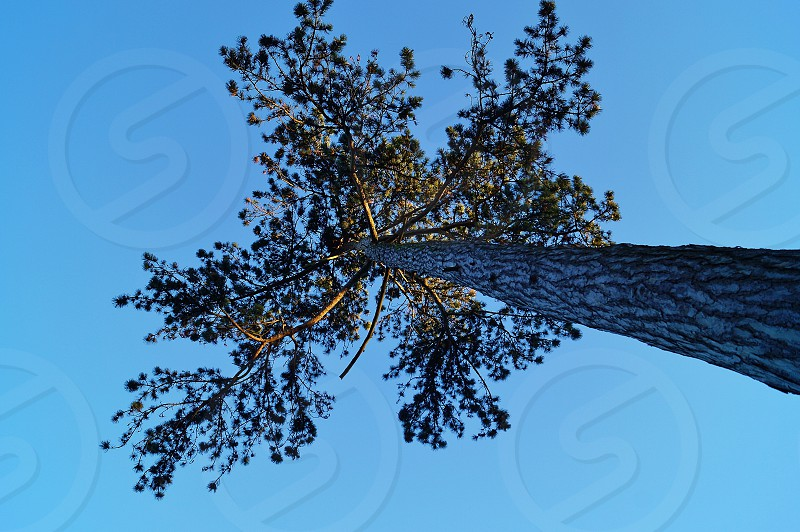Blue sky low angle looking up at a tree  photo