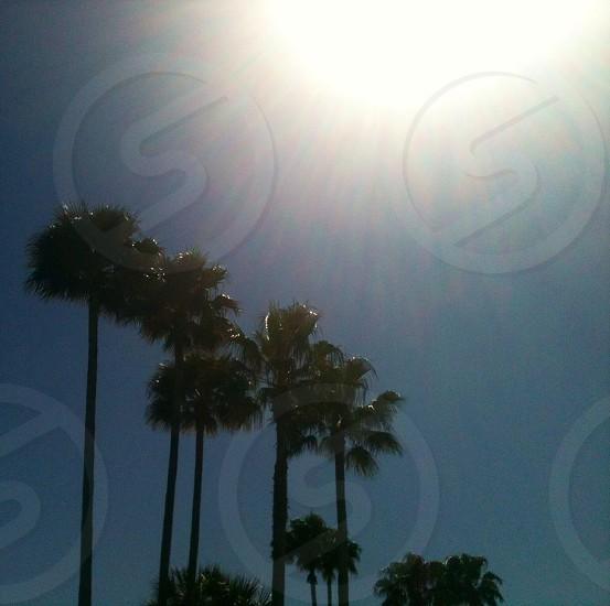 green coconut trees photo
