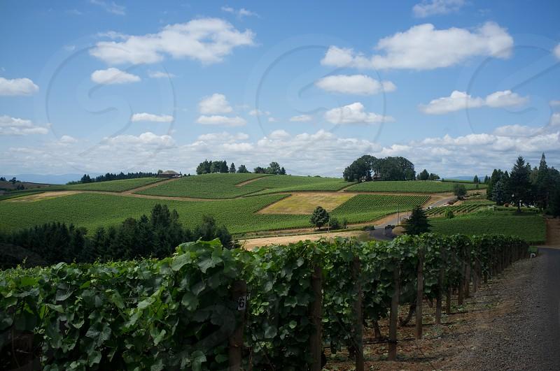 Oregon Wine Country photo