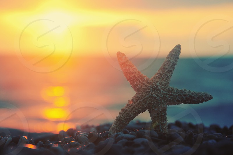 yellow star fish on a rock beside beach during sunset photo