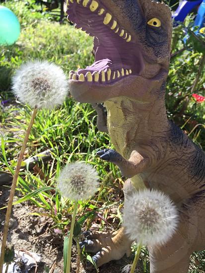 Dinosaur; Dandelion photo