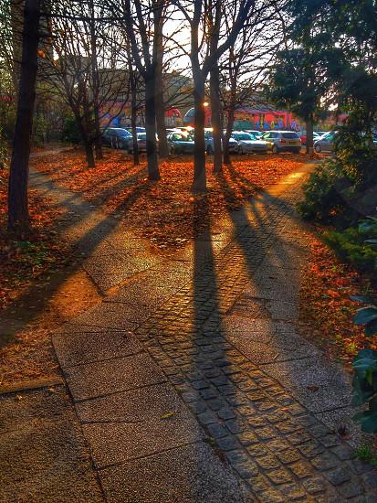 Sun Shining  Ljubljana photo