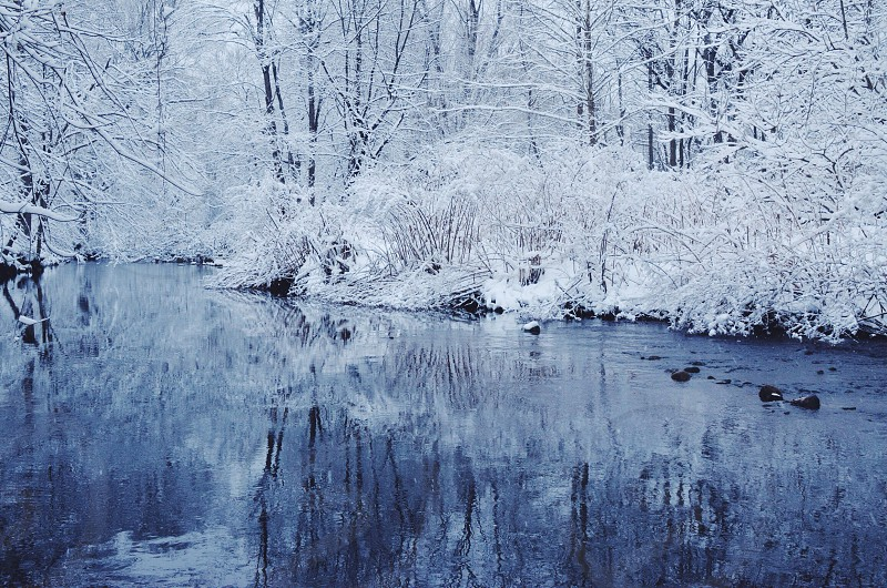snow covered tree branches beside the river photo