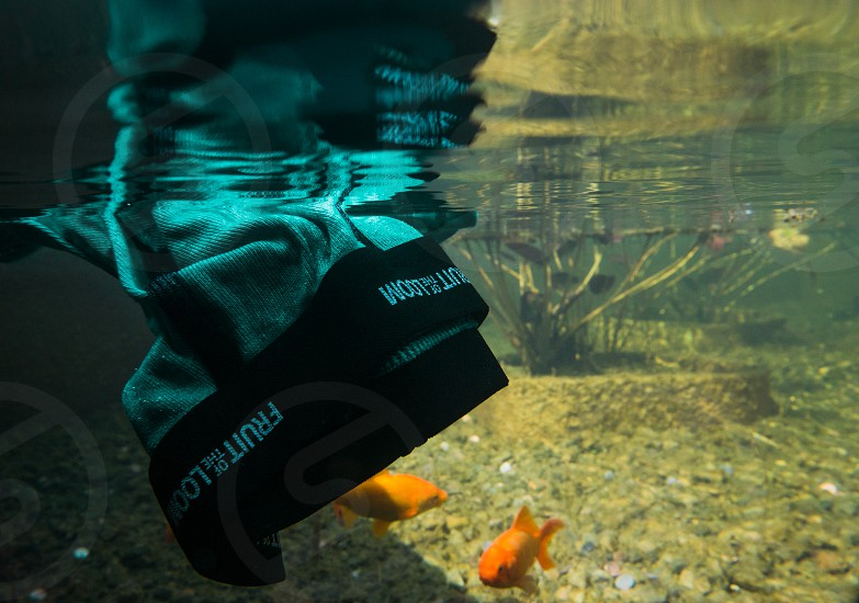 black and teal fruit of the loom brief submerged in clear water with 2 goldfishes photo