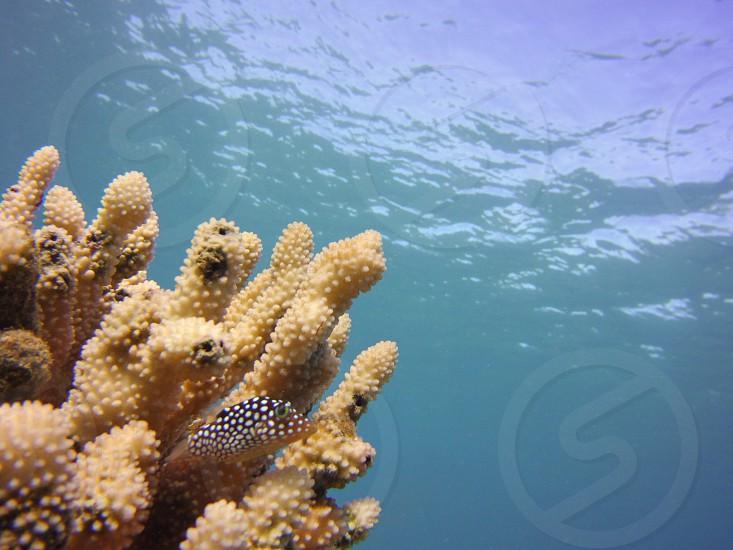 Fish tropical fish SeaLife ocean water underwater aquatic scuba diving snorkeling Hawaii  photo