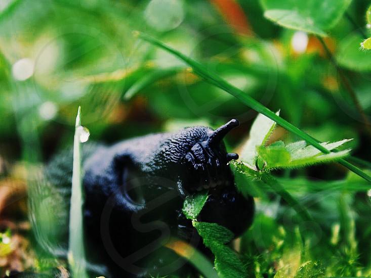 Toothy slug photo