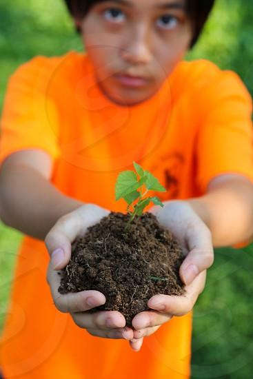 Holding; Human Hand; Ideas; Illuminated; Inspiration; Leaf; Low Key; Nature; New; New Life; Origins; Plant; Seedling; Small; concepts; horizontal;  photo