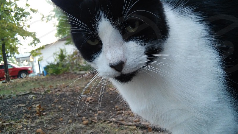 cat cats photo