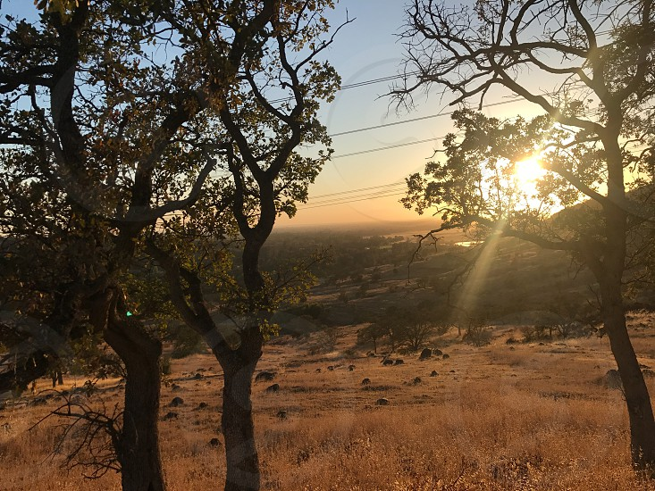 Nature sunset trees no person adventure spring  photo