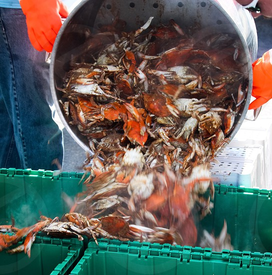 Crabs festival street food steaming food photo