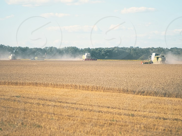 Wheat Harvesting with Combine Harvesters on a Sunny Summer Day photo