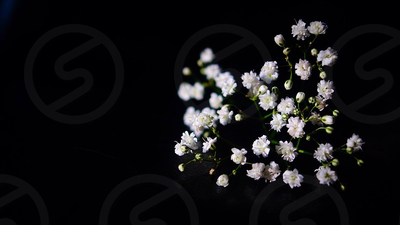 white baby's breath flowers photo
