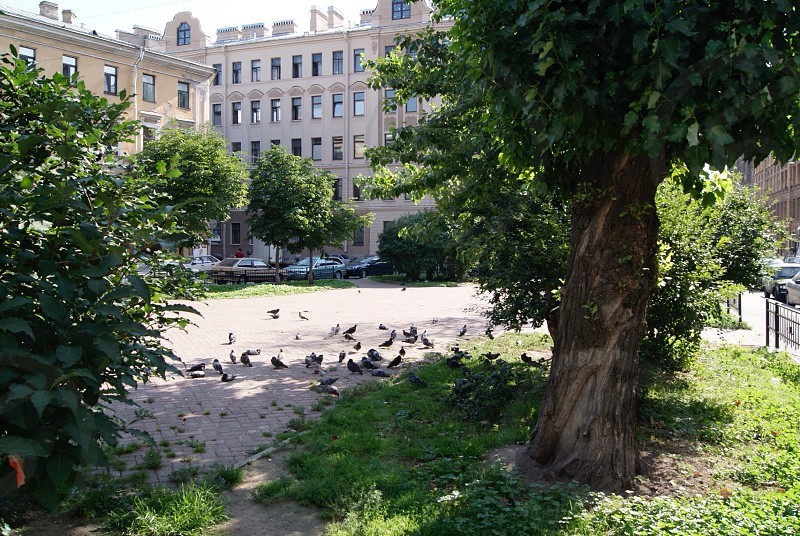 Pigeons  photo