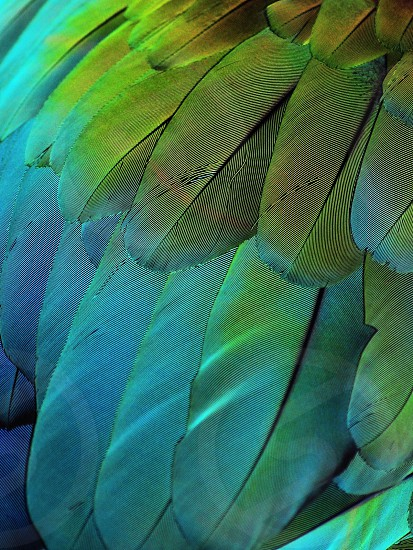 green blue and yellow bird feather photo