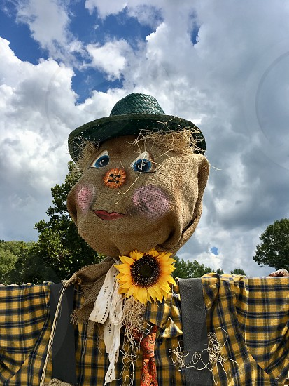 Fall scarecrow sunflower  photo