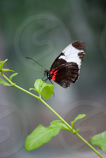 butterfly insect nature photo