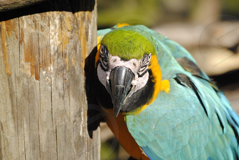 green yellow and teal parrot photo