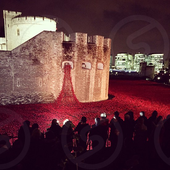 "Tower of London poppies 2014 ""Lest we forget"" photo"