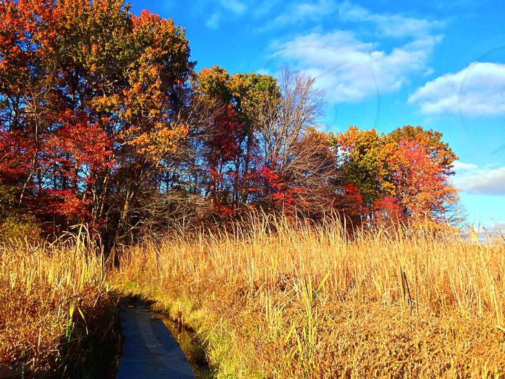 Wetlands trail ons sunny day in autumn photo