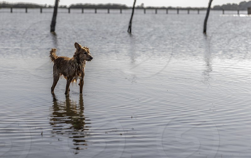 Small dog standing on water at the lake photo