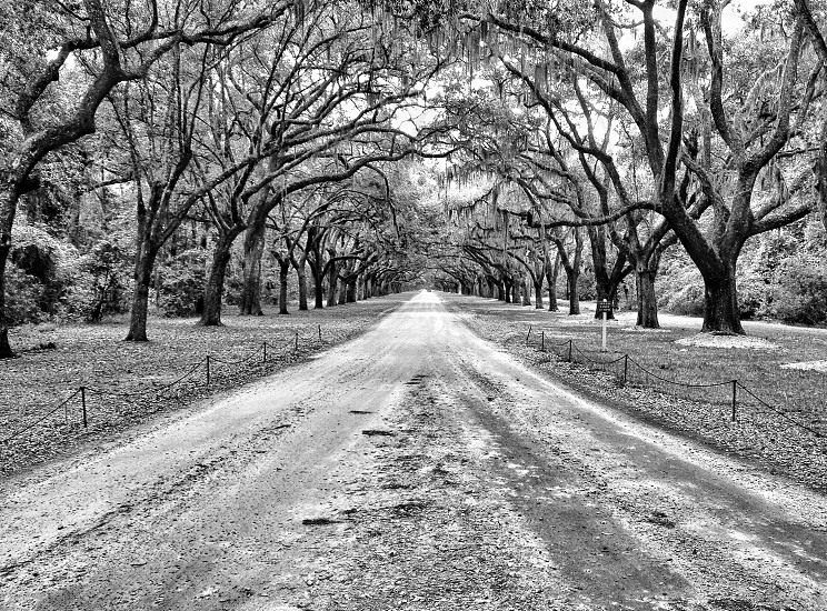 pathway grayscale photography photo