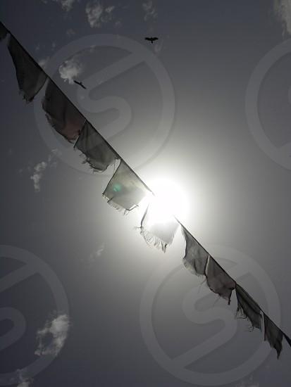 Eagles & Prayer Flags India photo
