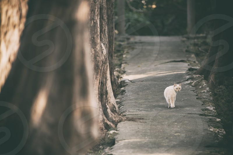 white cat on pathway photo