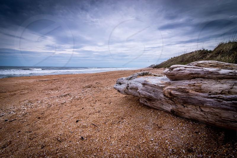 Log Beech Wood Coast Florida Cloudy Pebbles Beach Beachwood Rainy Ocean Atlantic  photo