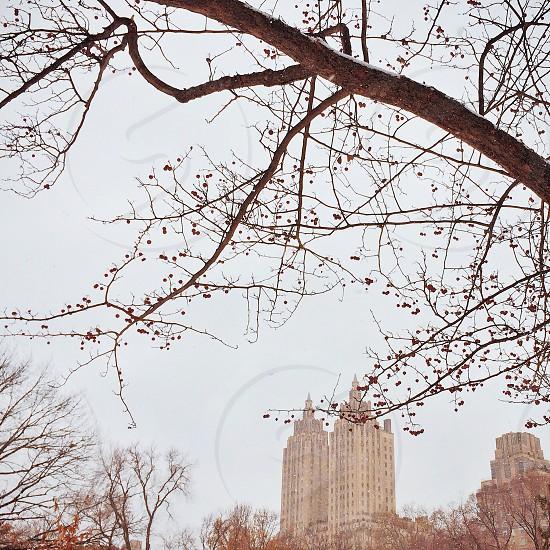 Central Park winter.  photo