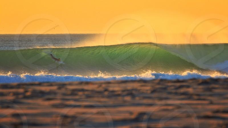 California Gold  photo