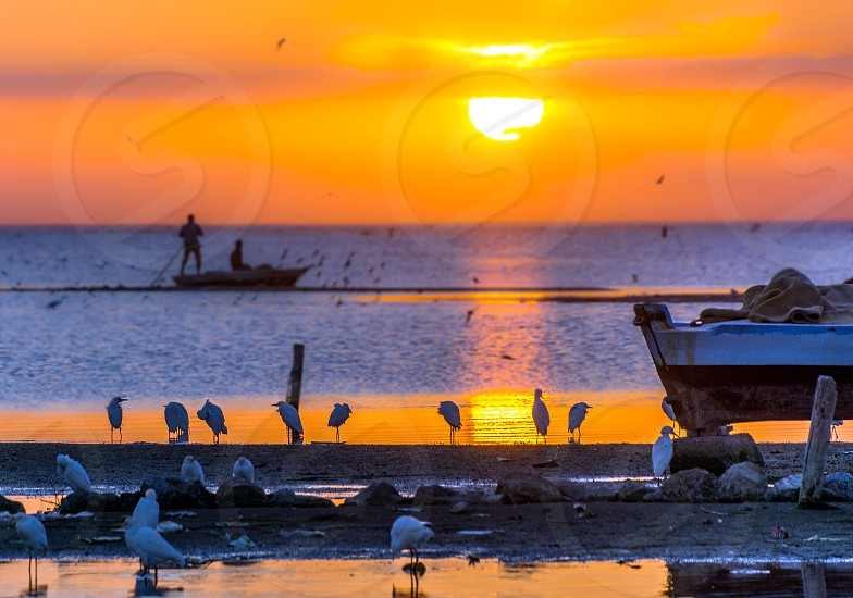 The sunset over the Brolous Lake and the Migration birds photo