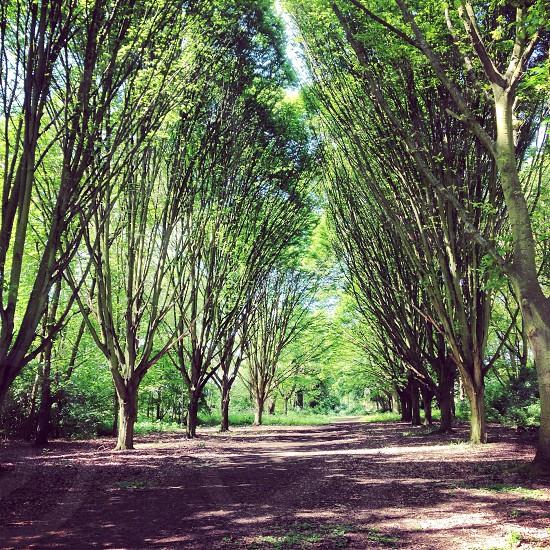 Woodland Gardens Richmond UK photo