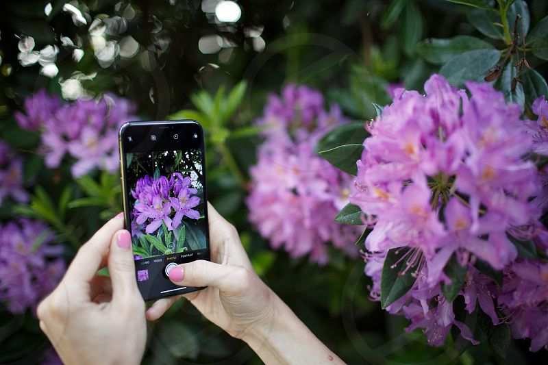 mobile phone hands flowers taking pictures photo
