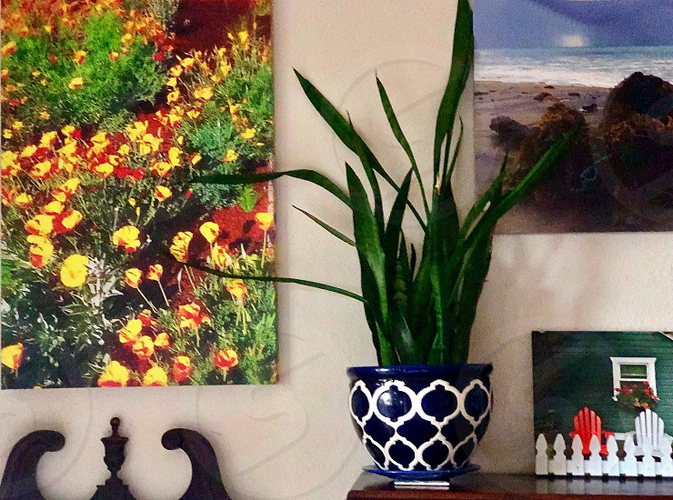 Plant Parent Request House Plant And California Poppies  photo