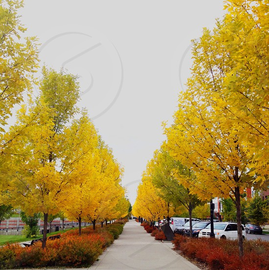 yellow leaf tree on gray pathway photo